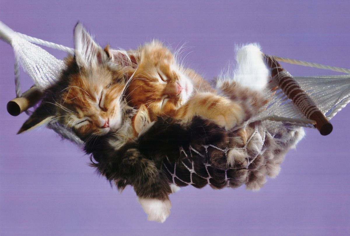 Cute Funny Cats d a puppy Gallery