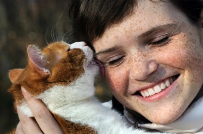 Rub Cat S Face In Urine