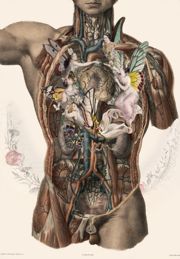 Bizarre Anatomy Art Gallery Ebaums World