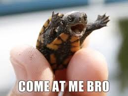 best of turtle meme s   gallery ebaum s world