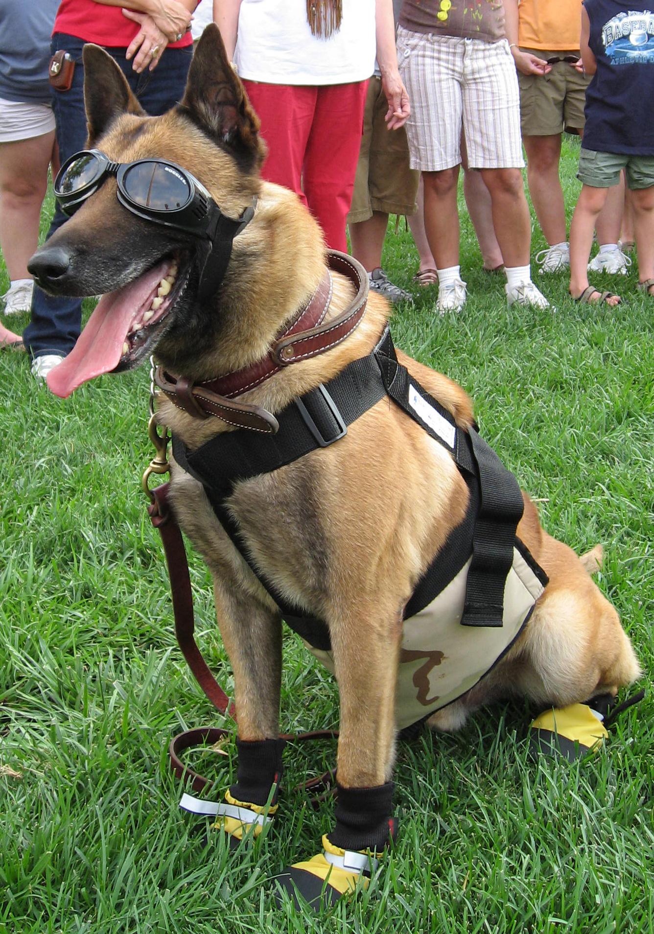 Military Working Dog Equipment
