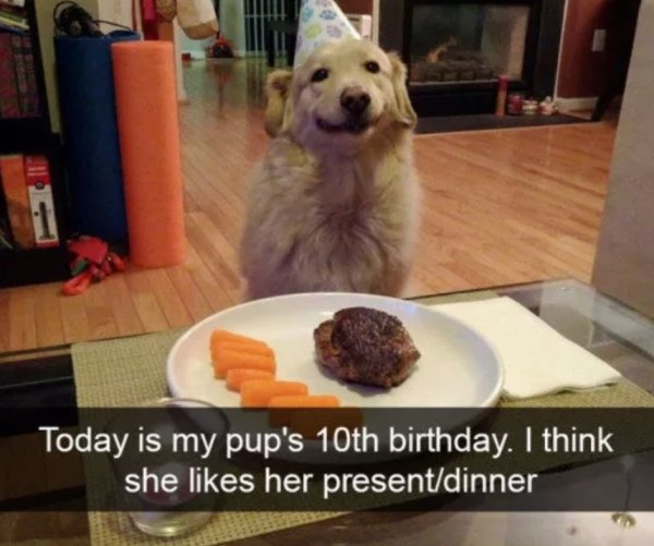 1 - 22 Dog Pics And Memes to Brighten Up Your Day