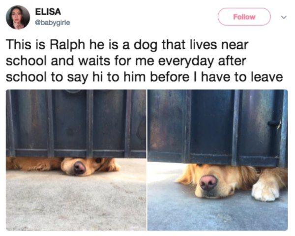 11 - 22 Dog Pics And Memes to Brighten Up Your Day