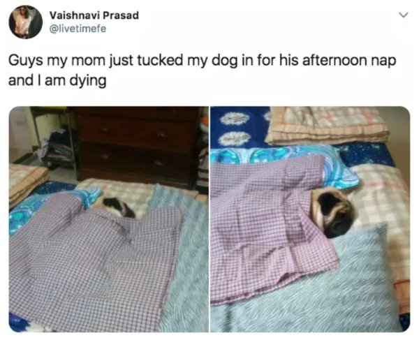 12 - 22 Dog Pics And Memes to Brighten Up Your Day