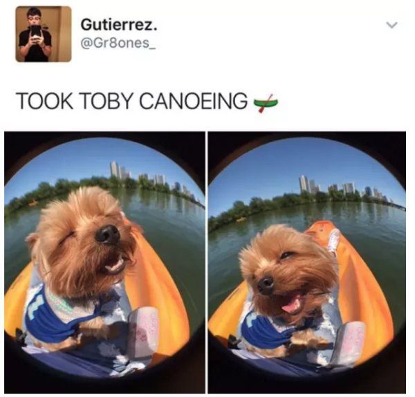 17 - 22 Dog Pics And Memes to Brighten Up Your Day