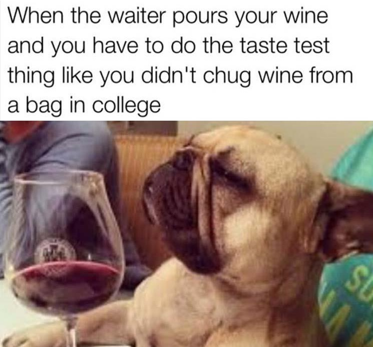 6 - Picture of a dog drinking whine all sophisticated with caption joking about how you act like you care about the wine but you used to just drink it out of a bag in college.
