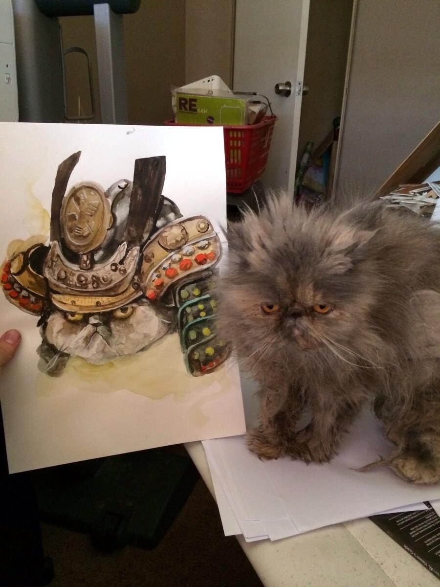 Imgur Viral Drama Samurai Cat Meme Wwwmiifotoscom
