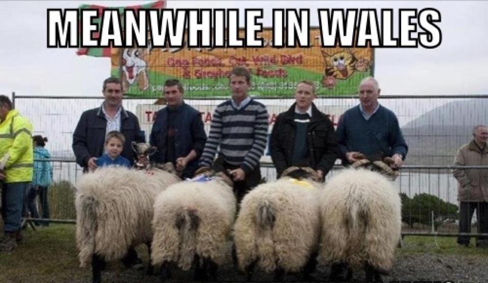 Welsh speed dating