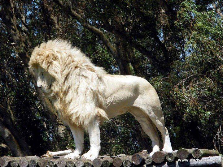 amazing crazy cool animals gallery ebaum s world