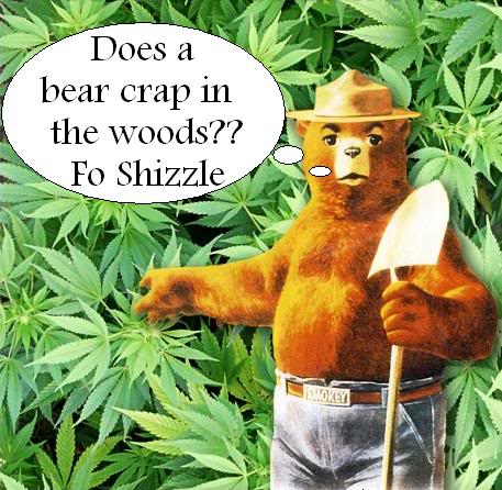 Does a bear crap in the woods jokes mlife express comps blackjack