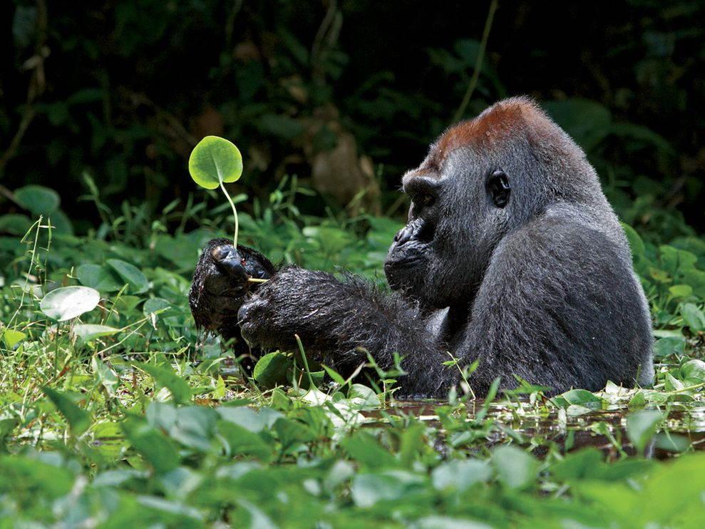 25 beautiful animal photos gallery ebaums world 9 25 beautiful animal photos voltagebd Image collections
