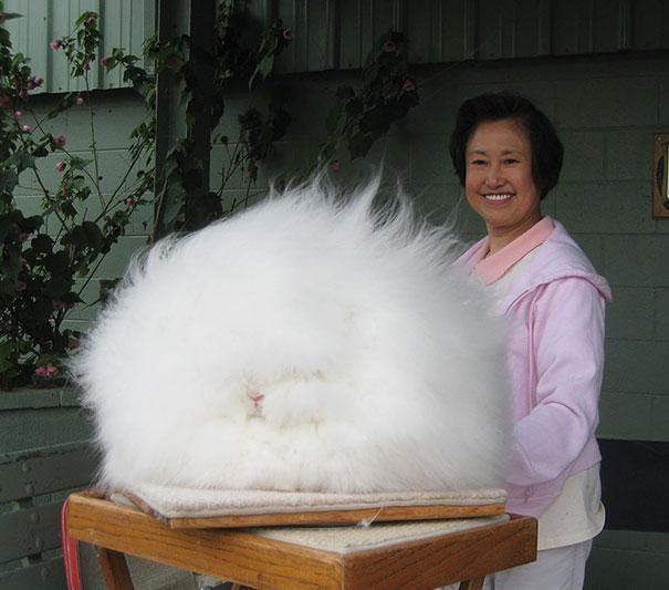 4 - An Agora rabbit