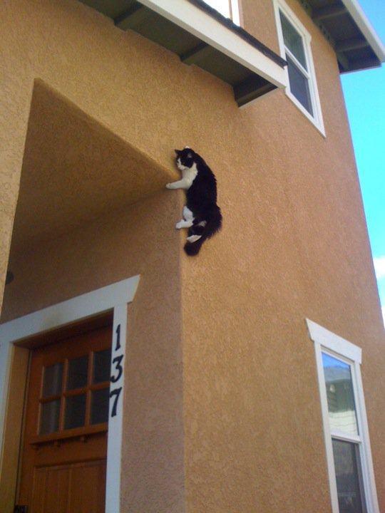 Lidojošie kaķi - Page 5 84462000