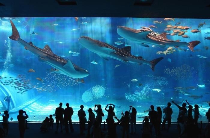 13 - Okinawa Aquarium