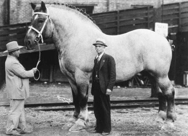 1 - The World's Biggest Horse, Brooklyn Supreme