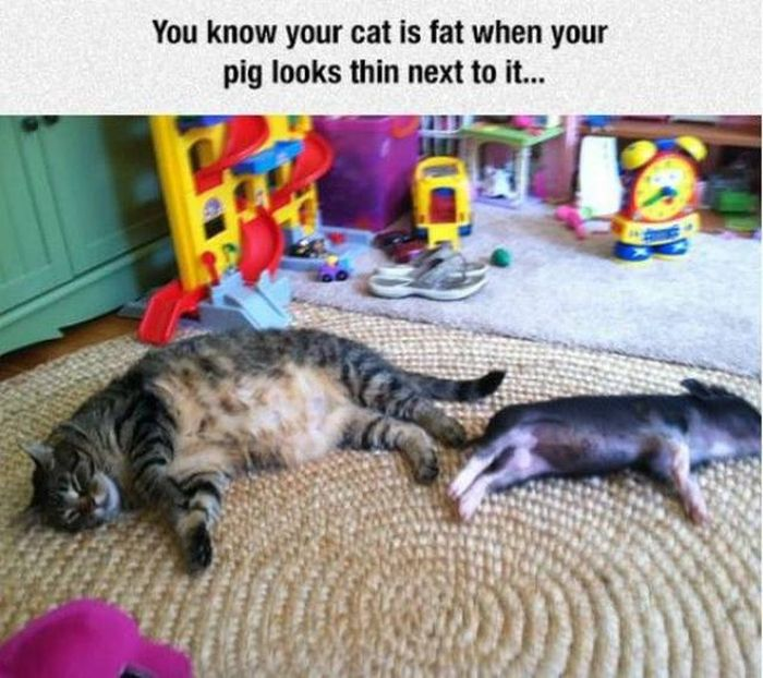 29 - 33 Funny and Weird Images to Improve your Mood.