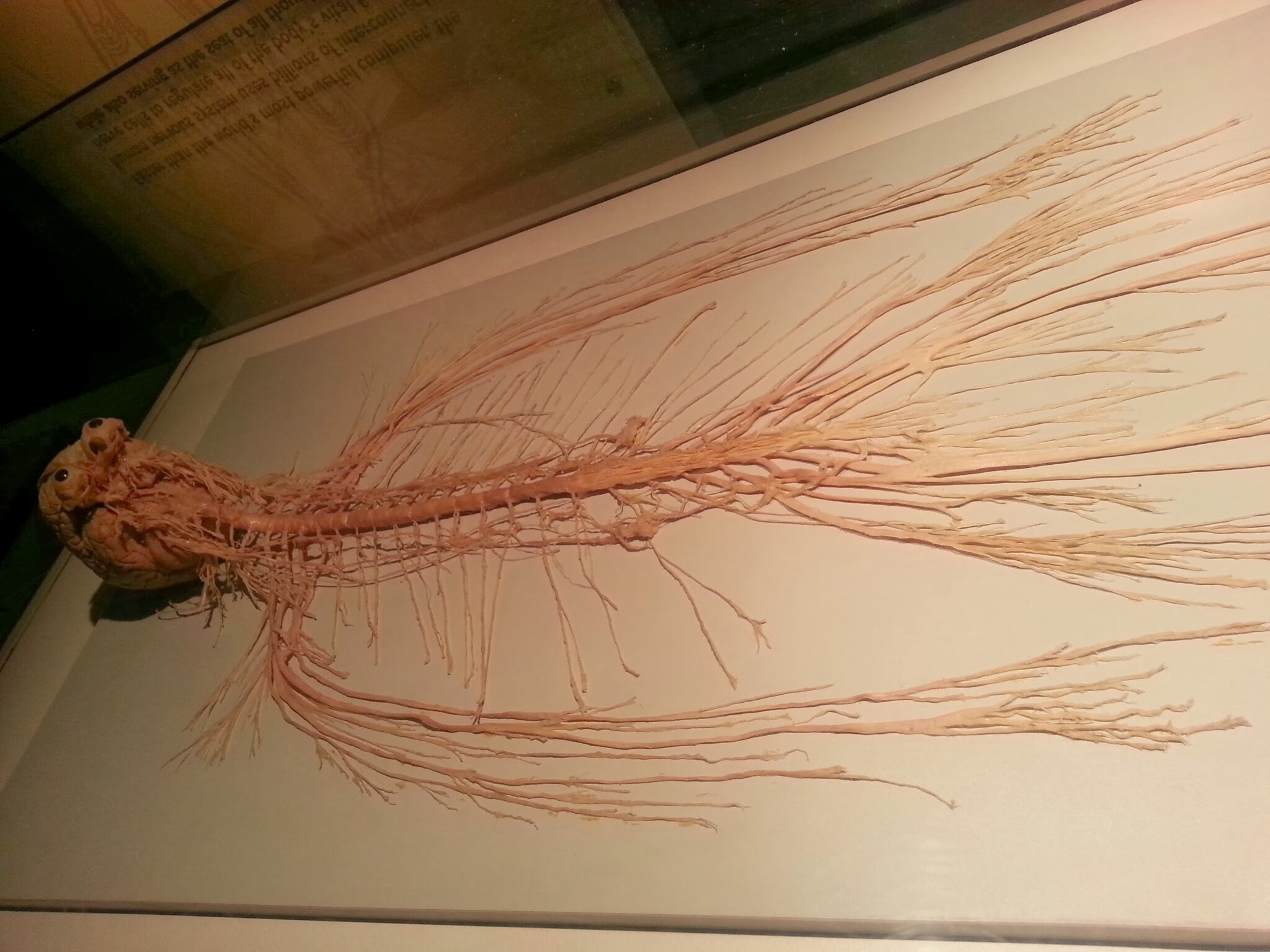21 - Our Nervous System