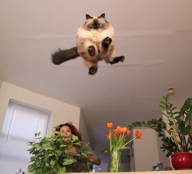 Lidojošie kaķi - Page 5 84471200