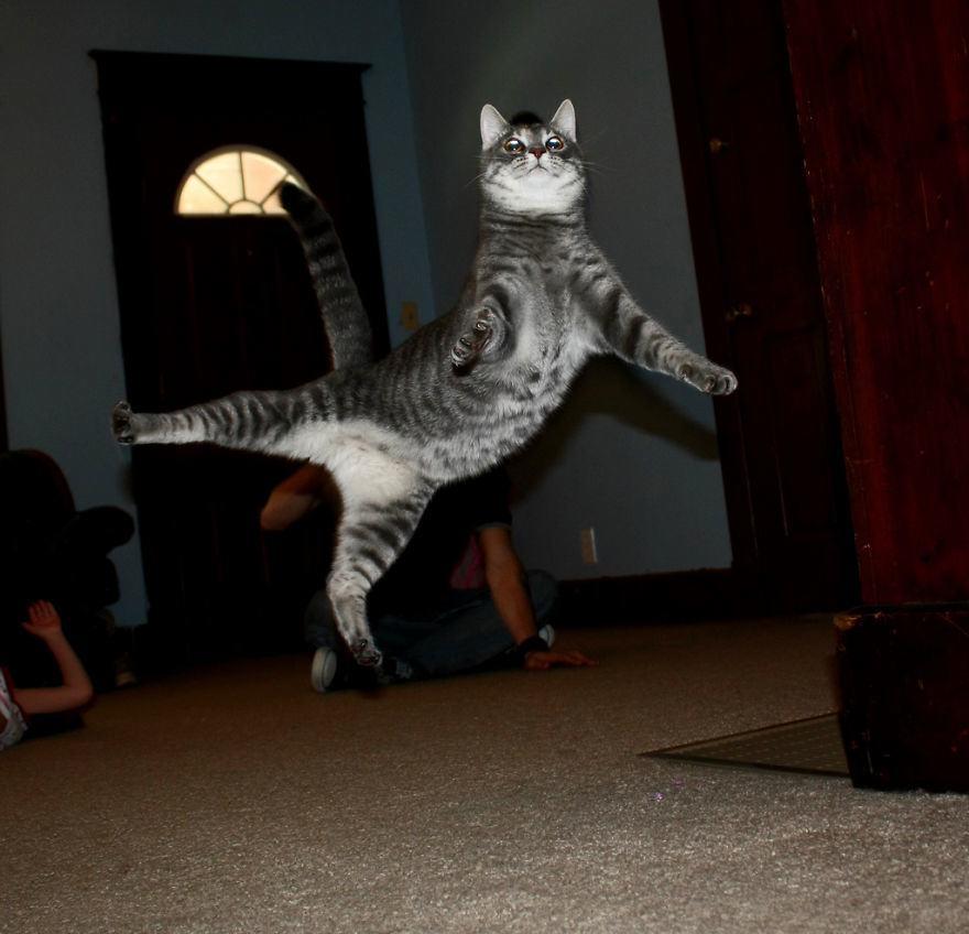 Lidojošie kaķi - Page 5 84471201