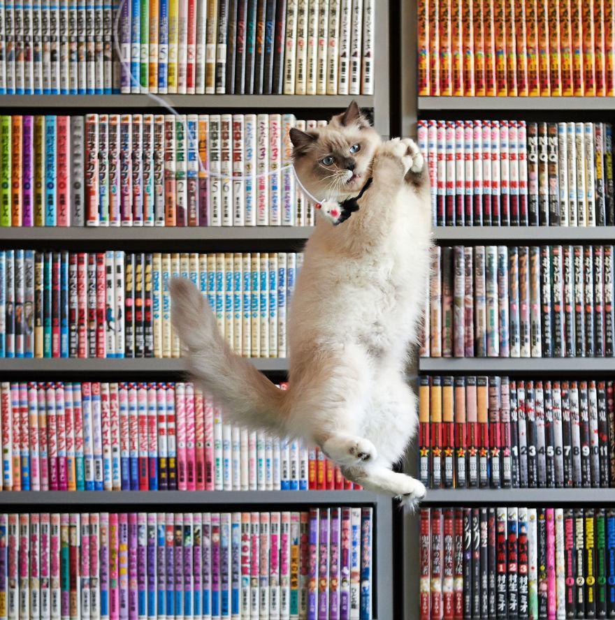Lidojošie kaķi - Page 5 84471204
