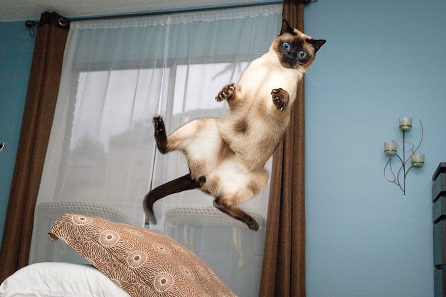 Lidojošie kaķi - Page 5 84471205