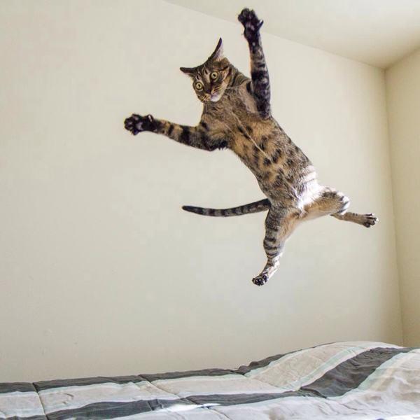 Lidojošie kaķi - Page 5 84471207