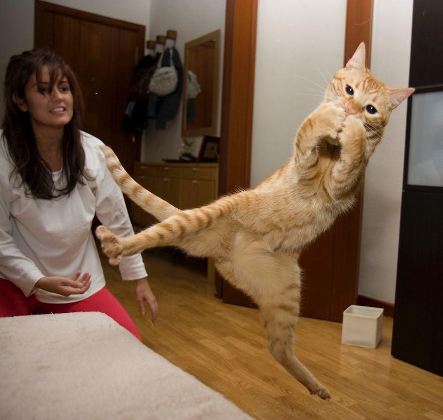 Lidojošie kaķi - Page 5 84471208