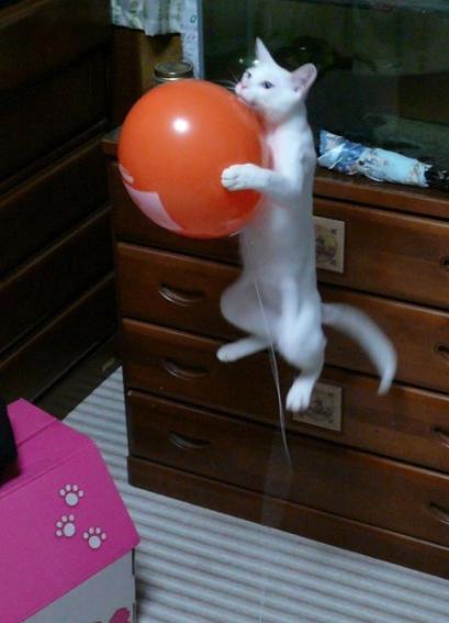 Lidojošie kaķi - Page 5 84471209