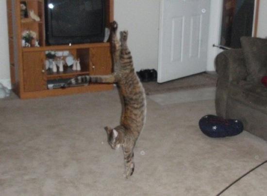 Lidojošie kaķi - Page 5 84471210