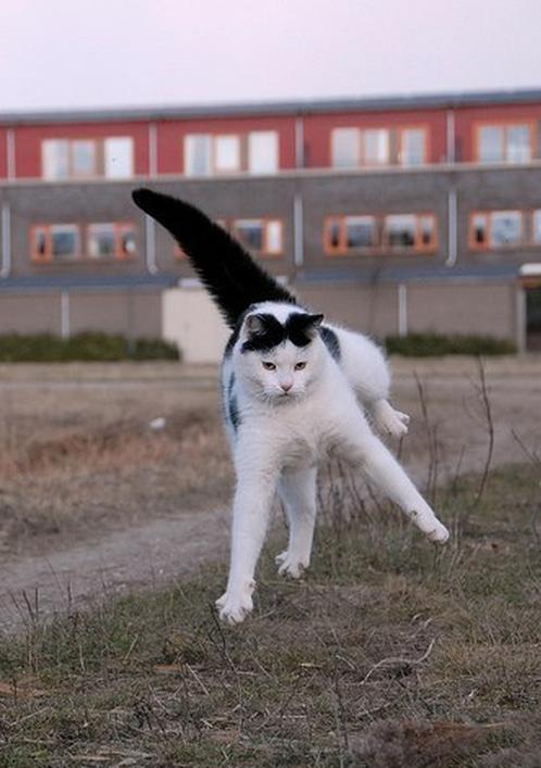 Lidojošie kaķi - Page 5 84471211