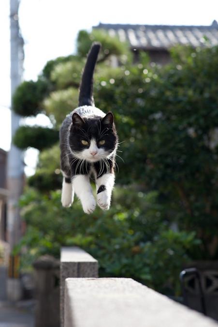 Lidojošie kaķi - Page 5 84471213