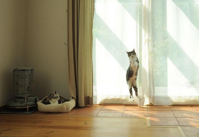 Lidojošie kaķi - Page 5 84471214