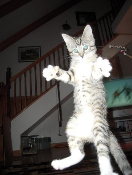 Lidojošie kaķi - Page 5 84471215