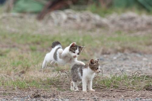 Lidojošie kaķi - Page 5 84471218