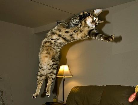 Lidojošie kaķi - Page 5 84471220