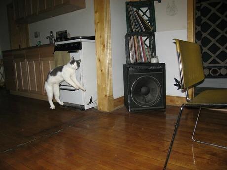 Lidojošie kaķi - Page 5 84471221