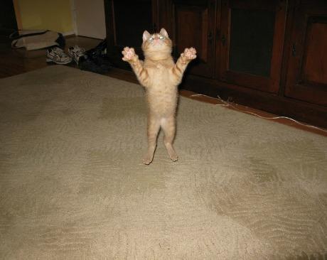Lidojošie kaķi - Page 5 84471222