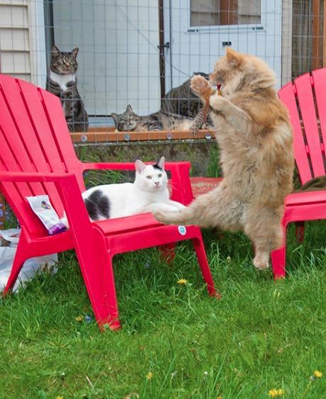 Lidojošie kaķi - Page 5 84471223