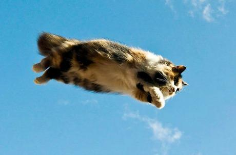 Lidojošie kaķi - Page 5 84471224