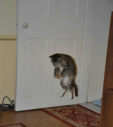 Lidojošie kaķi - Page 5 84471225