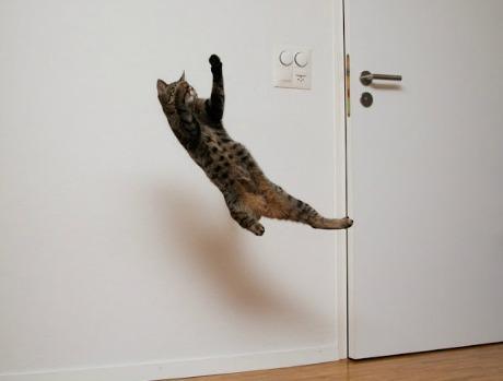 Lidojošie kaķi - Page 5 84471226