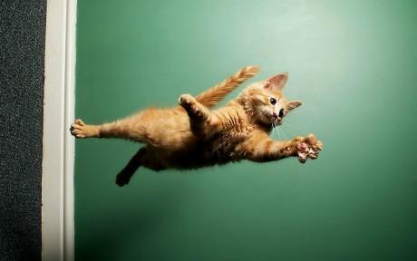 Lidojošie kaķi - Page 5 84471228