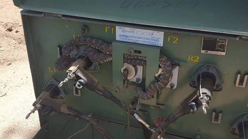 2 - Lizard or snake stuck in some kind of rugged machinery controls.