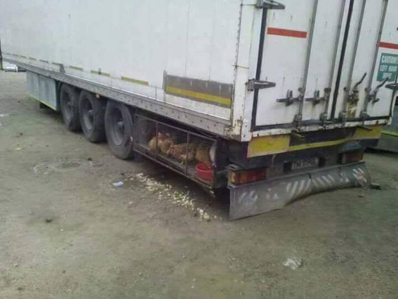16 - Trucking WTF