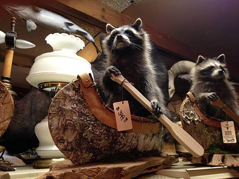 23 - Taxidermist window display of raccoons in leather canoes, with oar in hand and eyes on the horizon.