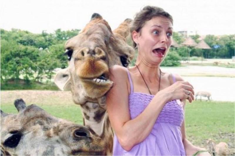 29 - Camel biting a woman