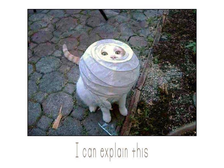Lidojošie kaķi - Page 5 84618285