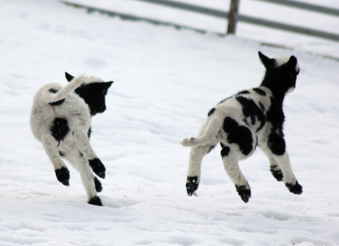 Funny SNOW Moments Gallery EBaums World - 21 hilarious dog moments