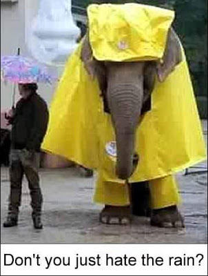 Funny Picture Of Elephant In The Rain