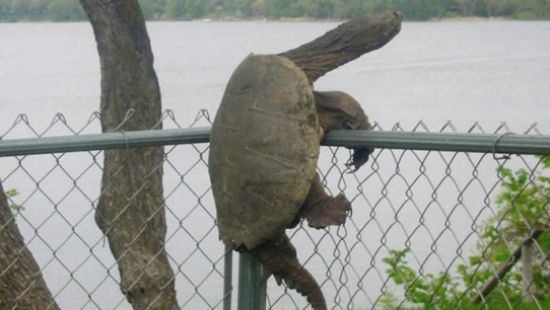 10 - Animals who are clearly stuck
